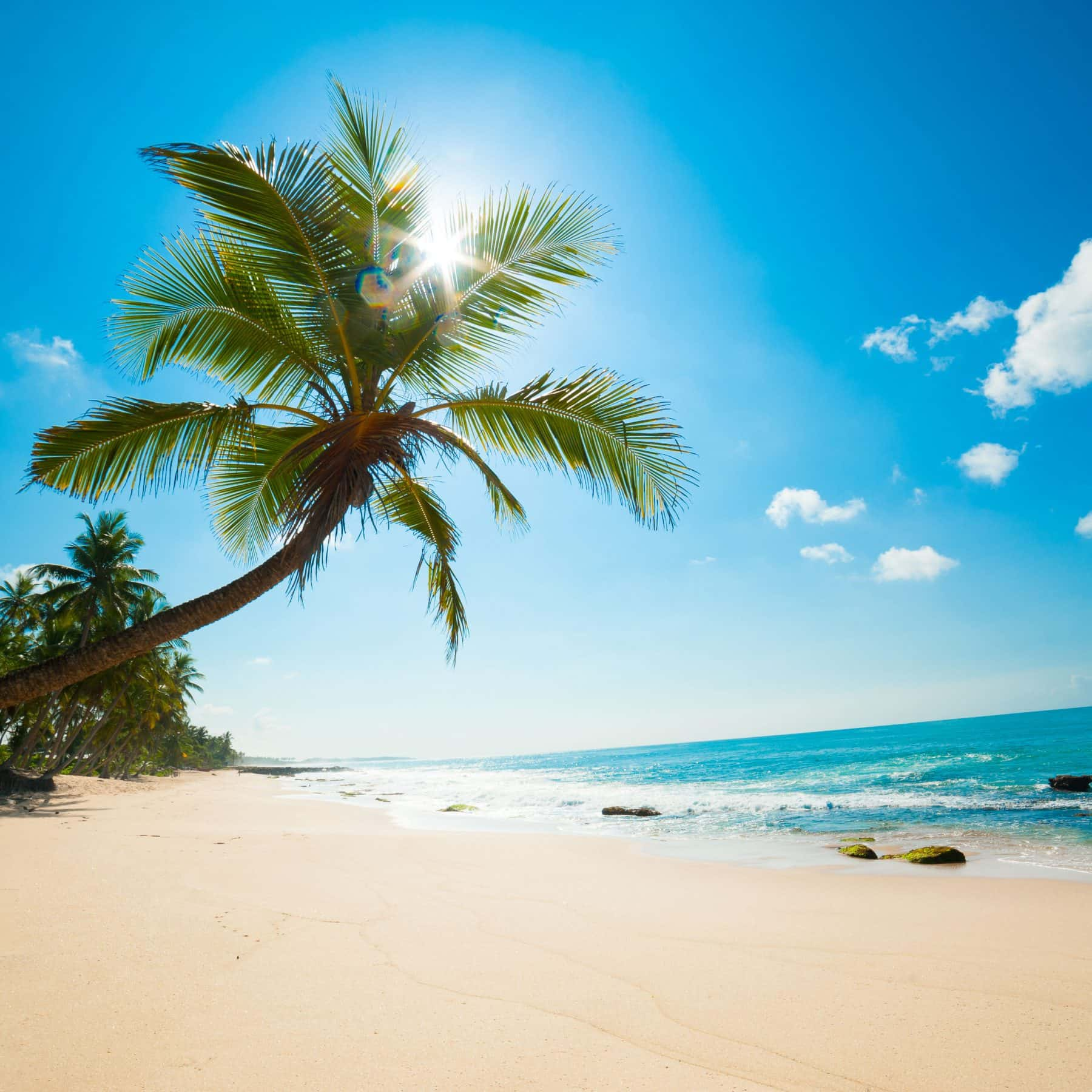Luxury Holiday Deals, beach, palm tree and ocean view