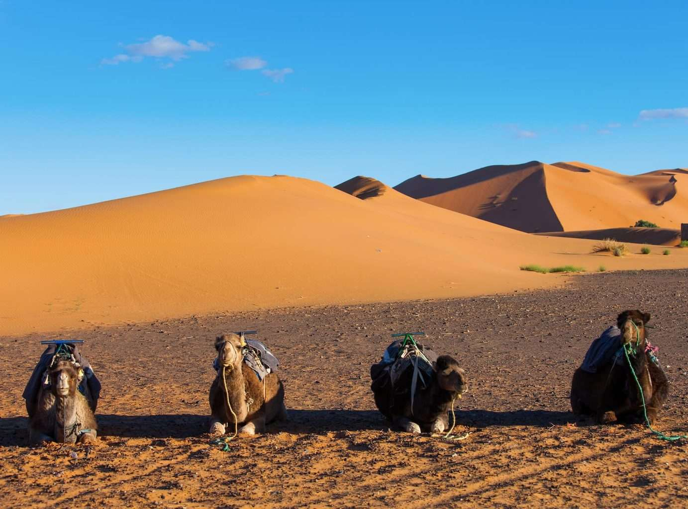 Luxury Abu Dhabi Holidays - Camels in desert view