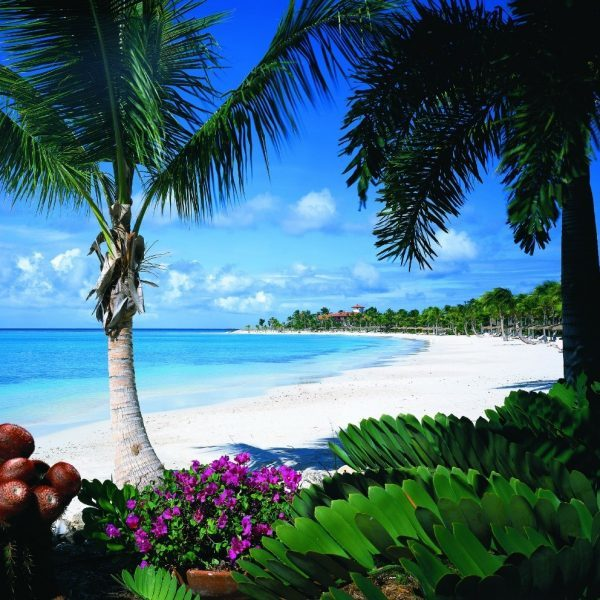 View of the beach with a palm tree at Jumby Bay in Antigua