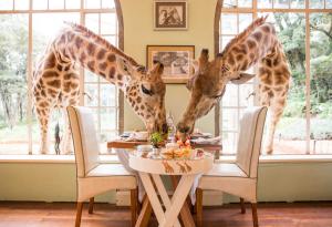 Tanzania and Zanzibar Holiday Giraffe Manor