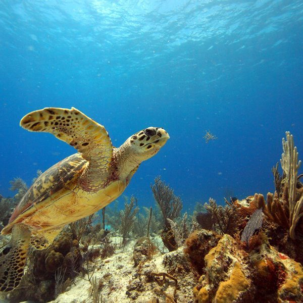 best hotels with waterparks in the world turtle in ocean and coral