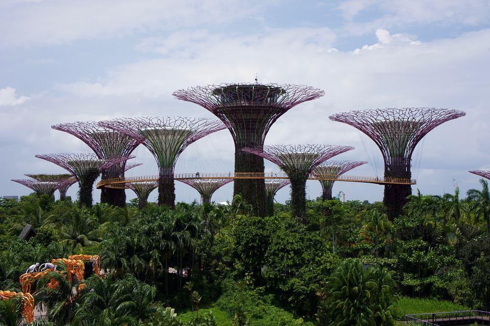 Gardens by the Bay Super-sized trees in Singapore. Things to do in Singapore blog.