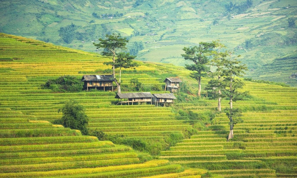 Rice Fields in Bali - Top Destinations Travel Blog